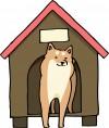 台風時に外飼いしている犬への対処方法はこれ!便利な道具も紹介